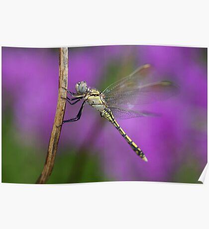Fairies in my Garden Poster