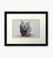 Cat Staring Portrait Framed Print