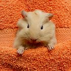 Chickpea by guineapigempire