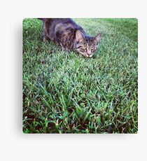 Cat on the Hunt Canvas Print