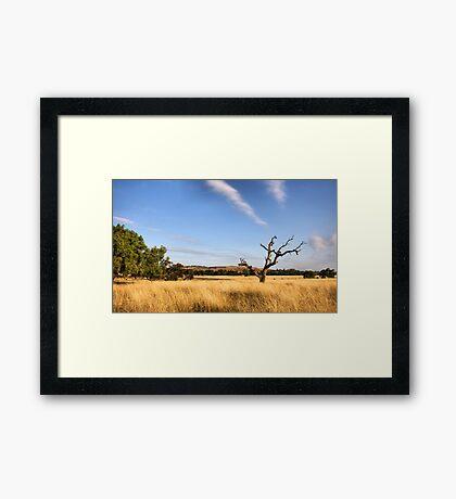 Surroundings  Framed Print