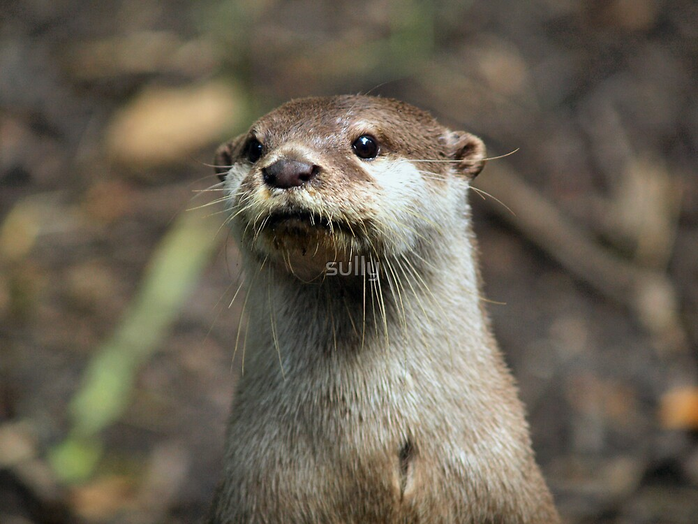 the otter by sully