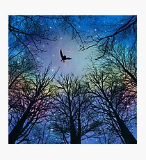 Wisdom Of The Night - Colorful Photographic Print