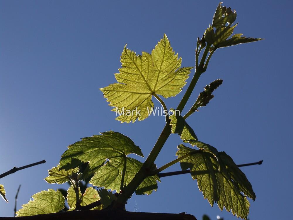 One Leaf by Mark  Wilson