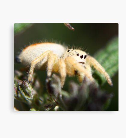 Spider HeadLights Canvas Print