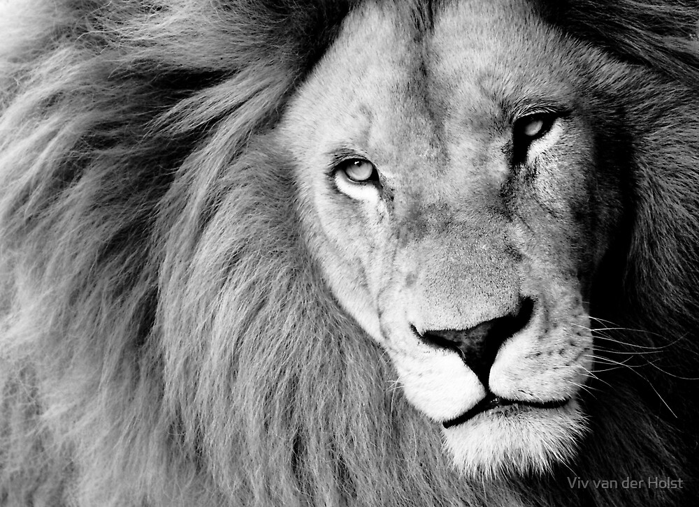 Lion by Viv van der Holst