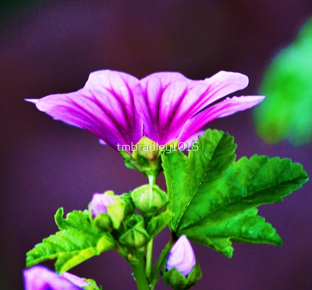 Purple by tmbradley1015