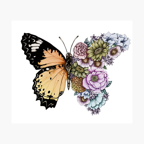 Butterfly in Bloom II Photographic Print