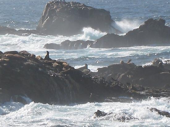 Point Lobos st reserve, Carmel, California by chord0