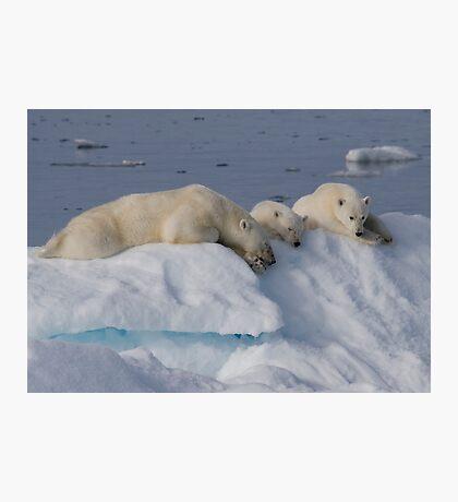Bears On Ice 2 Photographic Print