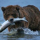 Bear Catch of the Day! by Anthony Goldman