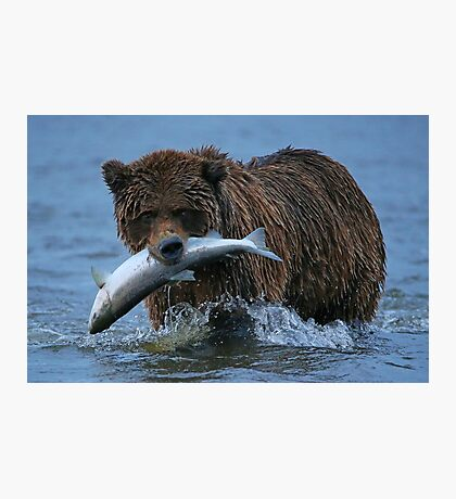 Bear Catch of the Day! Photographic Print