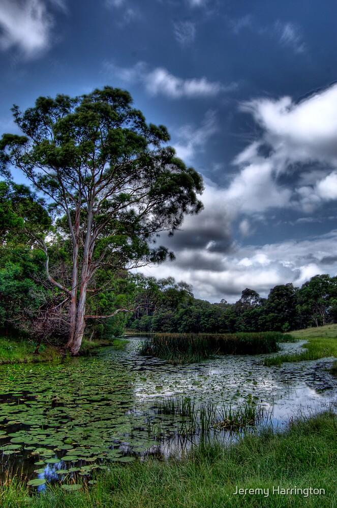 Down By The Pond by Jeremy Harrington
