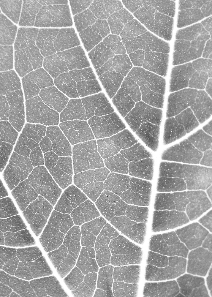 Leaf by abby hughes