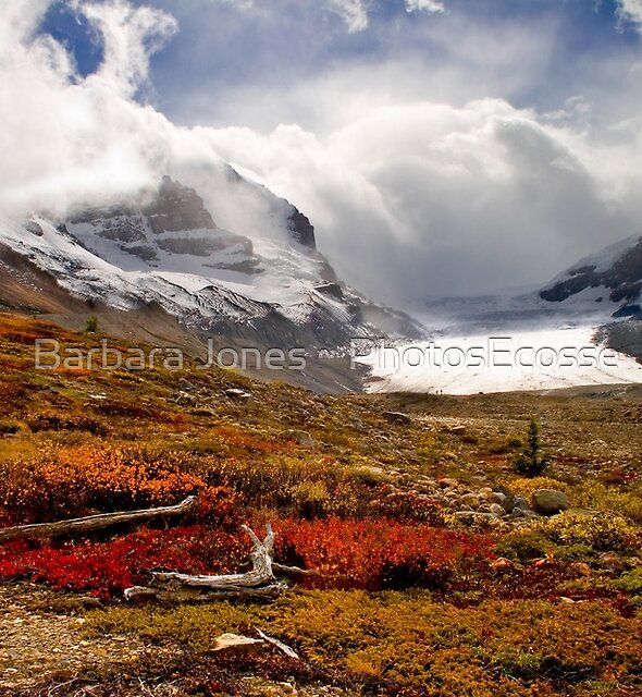 Athabasca Glacier and Mountains, Icefields Parkway NP, Alberta, Canada by Barbara  Jones ~ PhotosEcosse
