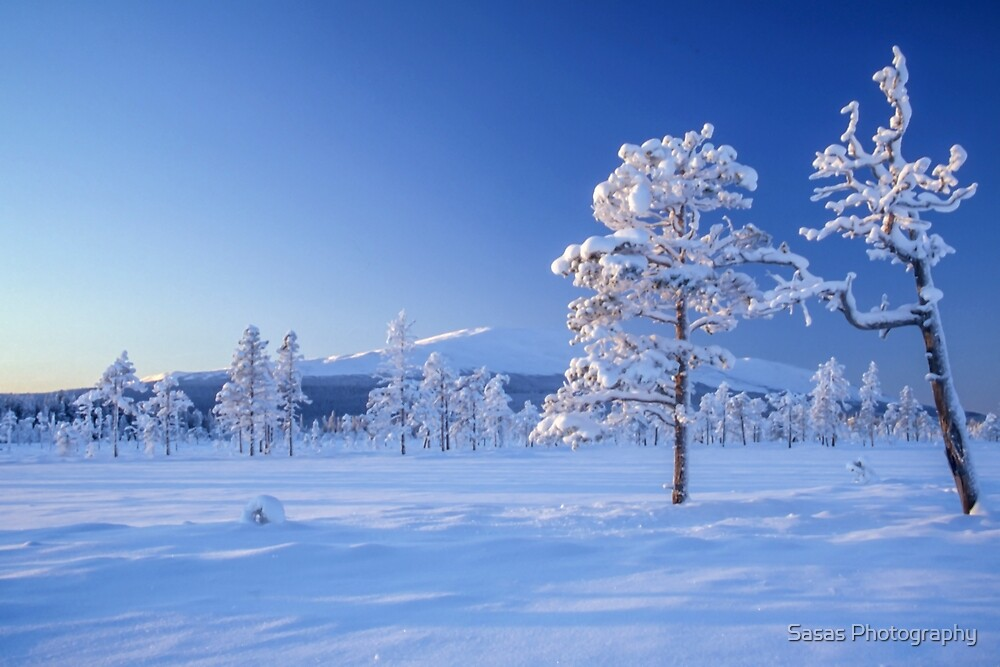 Snow covered trees by IB Photography