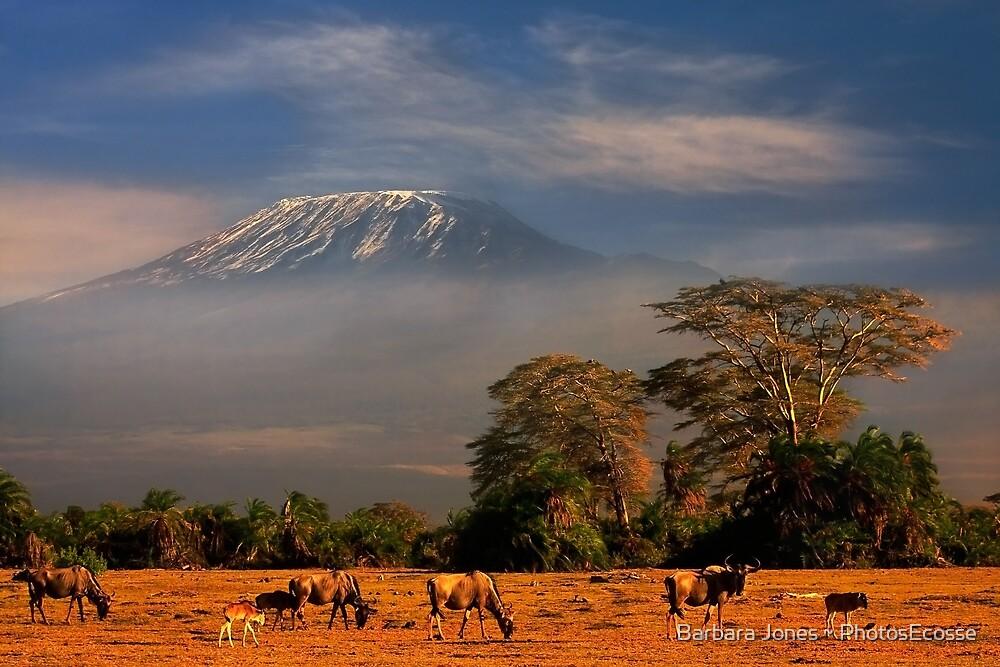 Kilimanjaro in early morning light, Amboseli National Park, Kenya, Africa. by Barbara  Jones ~ PhotosEcosse