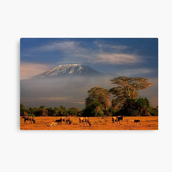 Kilimanjaro Early Morning Light  Amboseli NP Kenya Africa. Canvas Print