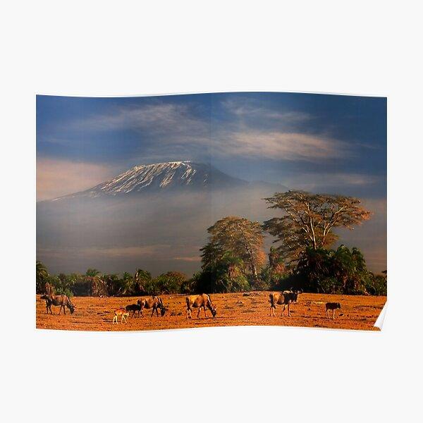 Kilimanjaro Early Morning Light  Amboseli NP Kenya Africa. Poster