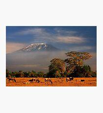 Kilimanjaro in early morning light, Amboseli National Park, Kenya, Africa. Photographic Print
