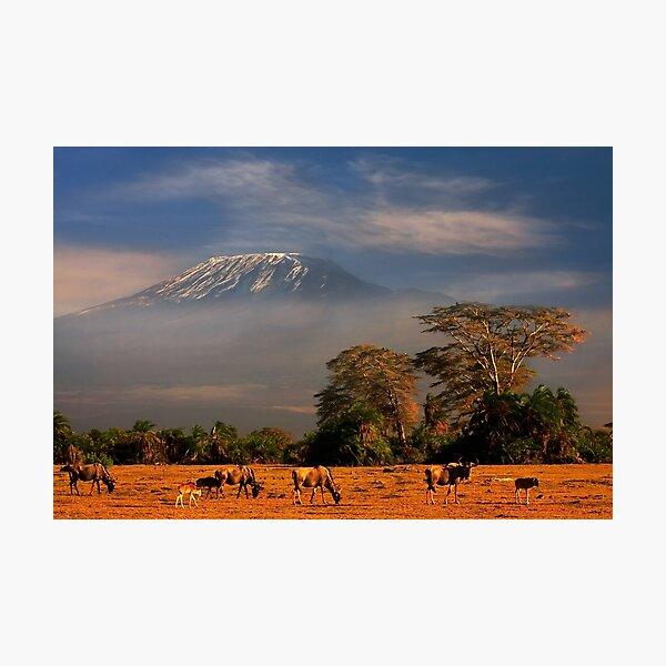 Kilimanjaro Early Morning Light  Amboseli NP Kenya Africa. Photographic Print
