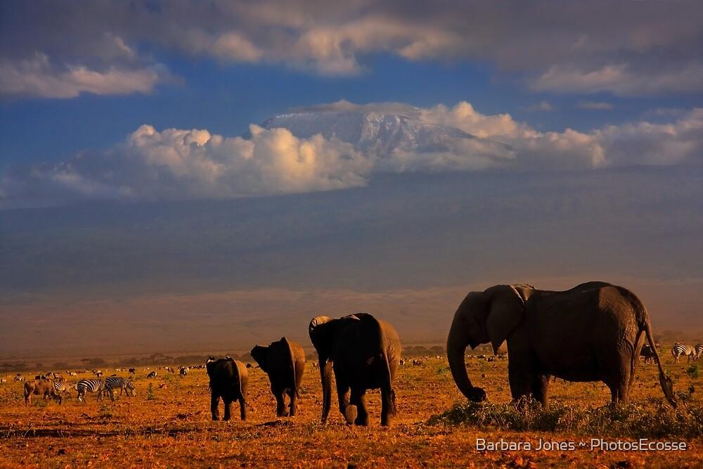 Kilimanjaro and Elephants at Sundown. Amboseli, Kenya, Africa. by Barbara  Jones ~ PhotosEcosse