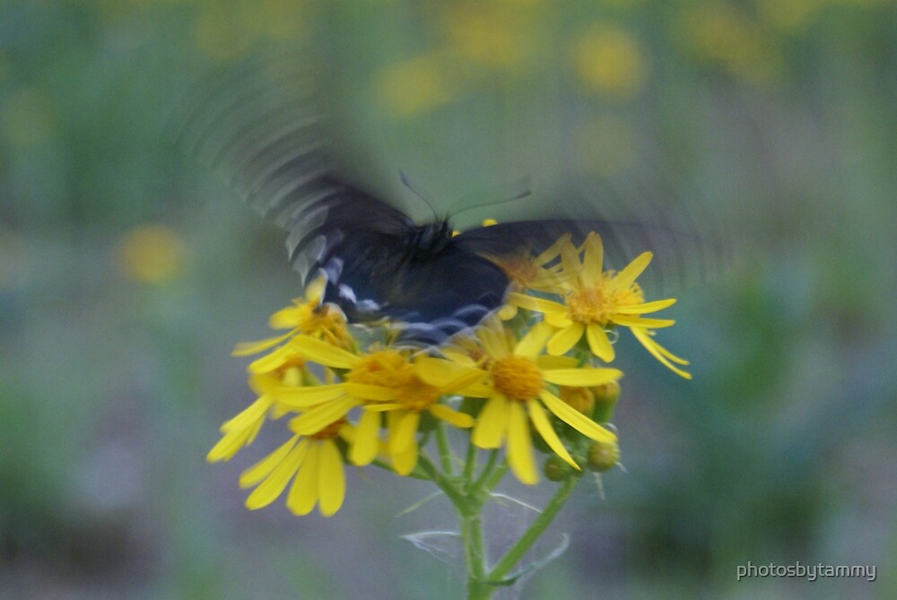 Poetry in Motion by photosbytammy