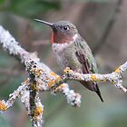 Hummingbird by Rochelle Smith