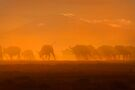 Buffalo in the dust, Amboseli National Park, Kenya, Africa. by PhotosEcosse