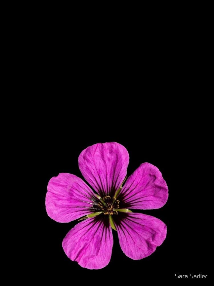 Pink Geranium flower by sadler2121