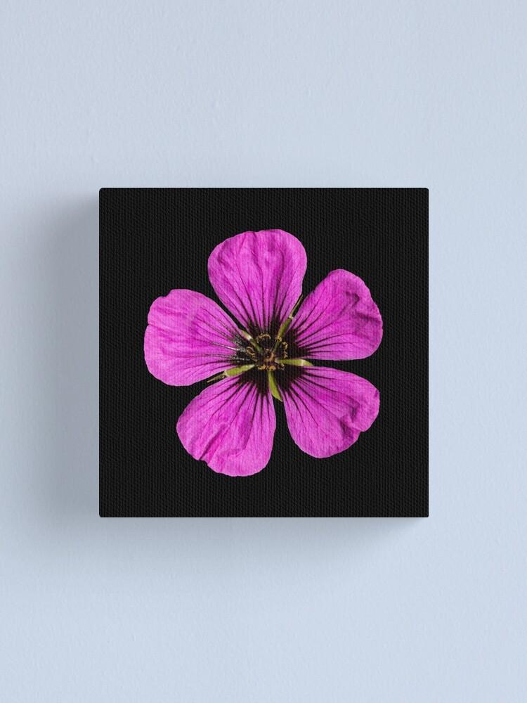 Alternate view of Pink Geranium flower Canvas Print