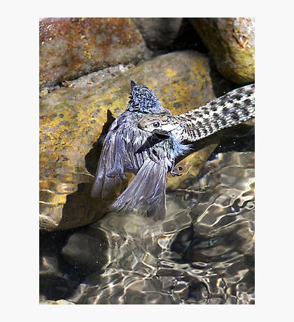 Snake with Bird (my dads pic) Photographic Print