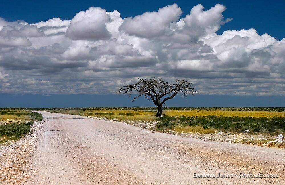 Lone Acacia tree, Etosha National Park, Namibia, Africa. by Barbara  Jones ~ PhotosEcosse