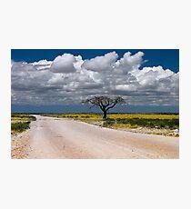 Lone Acacia tree, Etosha National Park, Namibia, Africa. Photographic Print