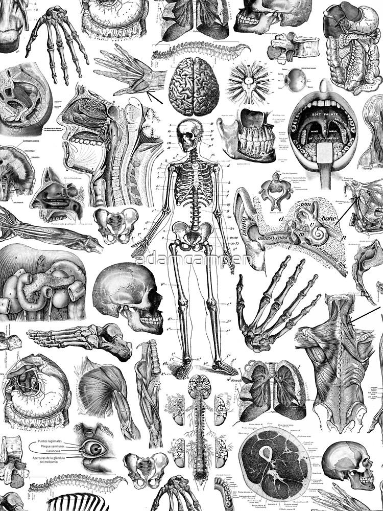 Human Anatomy White Print by adamcampen