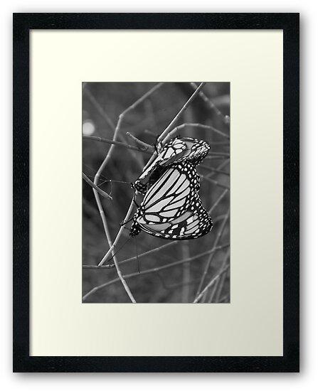 Butterflies by Laura Moore