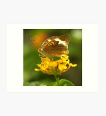 Common Buckeye I Art Print