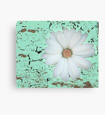 Daisy flower in white and abstract green Canvas Print