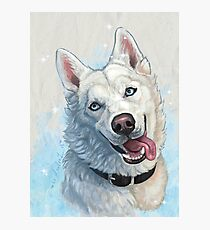 White Husky Photographic Print