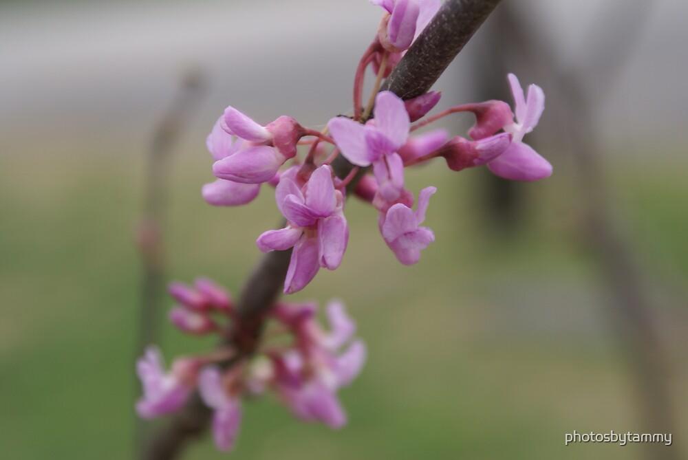 Pink flowers by photosbytammy