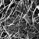Itsy Bitsy Spider Web by Nicole Weil T.