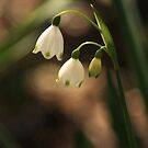 Snowdrops by Samantha Cole-Surjan