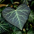 Ivy Heart by Billlee