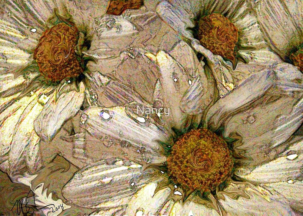 Daisies by Nancy