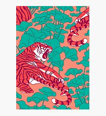 Scarlet tigers on lotus field. Photographic Print