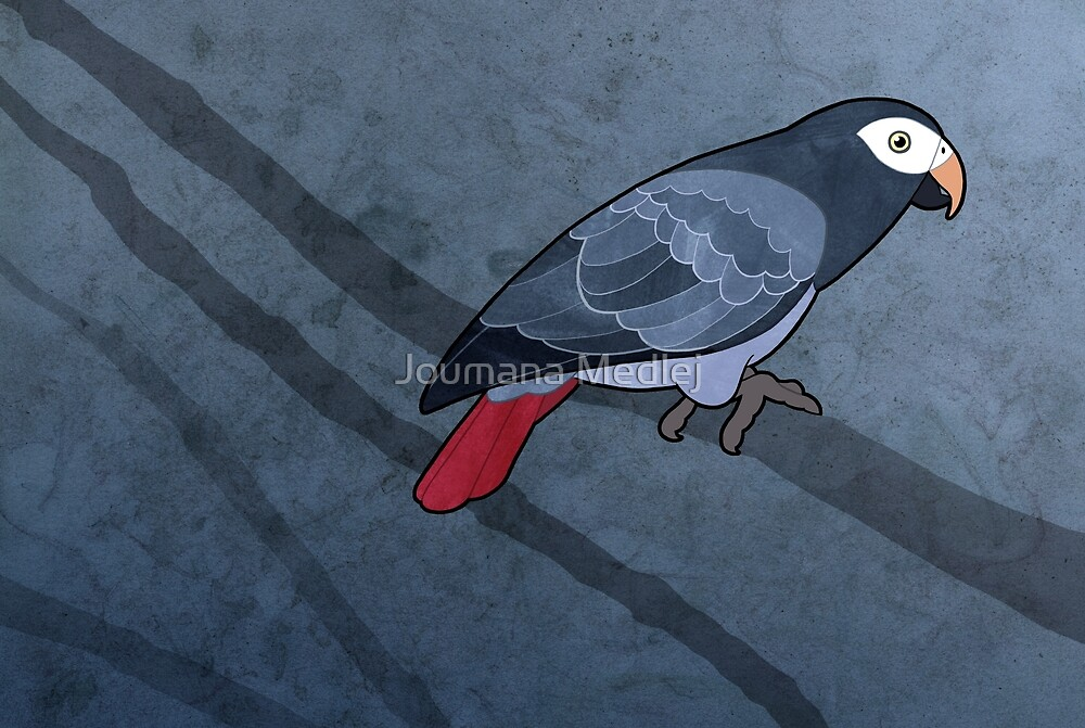 Timneh parrot (Psittacus timneh) by Joumana Medlej