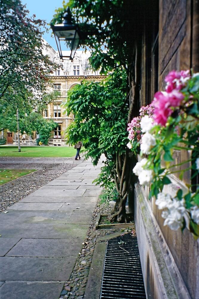 7 Inside Caius College, Cambridge by Priscilla Turner