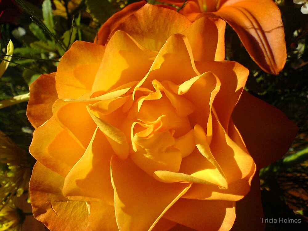 Rose so sweet... by Tricia Holmes