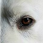 An Eye To The Soul. by vette