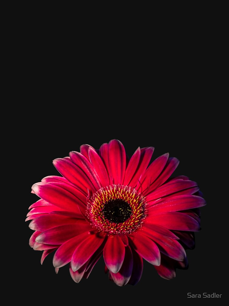 Close up of a red Gerbera Flower by sadler2121